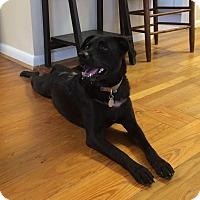 Adopt A Pet :: Jazzy (Jasmine Star) - Hagerstown, MD