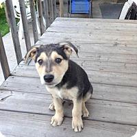 Adopt A Pet :: Harry Potter - Saskatoon, SK