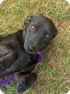 Dachshund/Basset Hound Mix Dog for adoption in Smithtown, New York - Clementine
