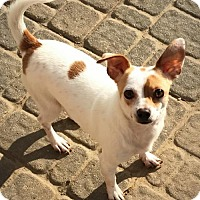 Adopt A Pet :: Carmelo - Indianapolis, IN