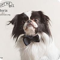 Adopt A Pet :: Boris - Chandler, AZ