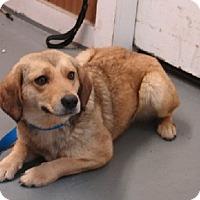 Adopt A Pet :: Louise - Aurora, IL