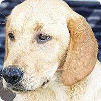Adopt A Pet :: Newman - Foster, RI
