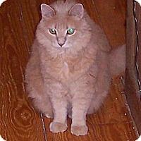 Adopt A Pet :: J.J. - Summerville, SC