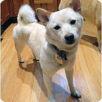 Adopt A Pet :: Roxy (Minnesota) - Round Lake, IL