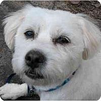 Adopt A Pet :: Twister - Rigaud, QC