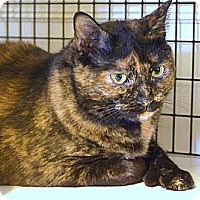 Adopt A Pet :: Mits - Victor, NY