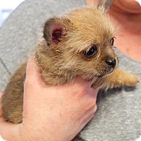 Adopt A Pet :: Jerry - Marietta, GA