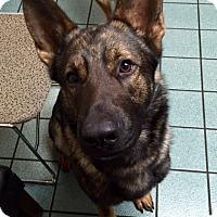 Adopt A Pet :: Dante - North Bend, WA