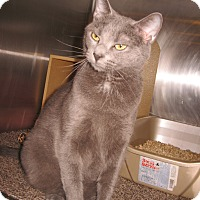 Adopt A Pet :: Summer - Colmar, PA