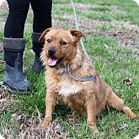 Cairn Terrier/Corgi Mix Dog for adoption in Glastonbury, Connecticut - Deacon