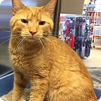 Adopt A Pet :: Rocky - Manchester, CT