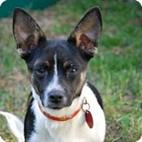 Adopt A Pet :: Bucky - New Milford, CT