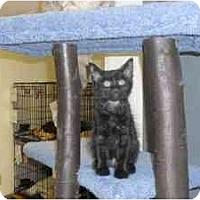 Adopt A Pet :: Etta - Milwaukee, WI
