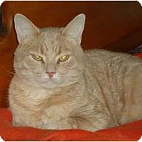 Adopt A Pet :: Phoenix - Elmira, ON