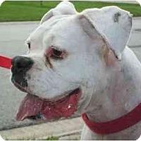 Adopt A Pet :: Gracie - Albany, GA