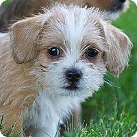 Adopt A Pet :: Pnut - Providence, RI