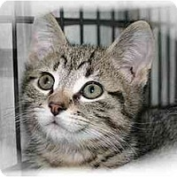 Adopt A Pet :: Dominic - Montgomery, IL