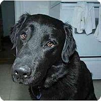 Adopt A Pet :: Ernest - Rigaud, QC