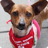 Adopt A Pet :: Ally - Baton Rouge, LA