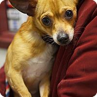 Adopt A Pet :: Peanut - Springfield, IL