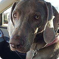 Adopt A Pet :: Emma - Grand Haven, MI