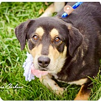 Adopt A Pet :: Mandy - ADOPTED! - Zanesville, OH