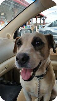 Labrador Retriever/Hound (Unknown Type) Mix Dog for adoption in Demorest, Georgia - Sandy
