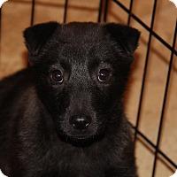 Adopt A Pet :: Alfredo - Phoenix, AZ
