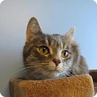 Adopt A Pet :: Vixen - Northfield, MN