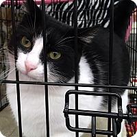 Adopt A Pet :: Oreo - College Station, TX