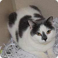 Adopt A Pet :: TJ - Pottsville, PA