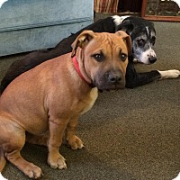 Adopt A Pet :: Courtesy Post. Annie - Upper Sandusky, OH