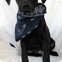 Adopt A Pet :: Patrick - Mooresville, NC