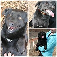 Adopt A Pet :: Donny - Bardonia, NY