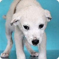 Adopt A Pet :: Heather - Waldorf, MD
