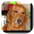 Basset Hound/Dachshund Mix Dog for adoption in Marietta, Georgia - Mini