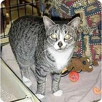 Adopt A Pet :: Dorito - Chesapeake, VA