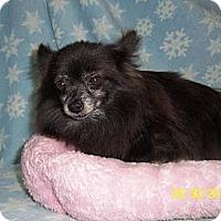 Adopt A Pet :: Lelia - Shawnee Mission, KS