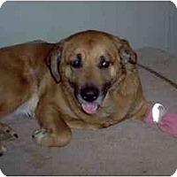 Adopt A Pet :: Flo - Albany, NY