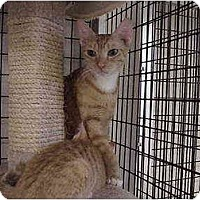 Adopt A Pet :: The Golden Ones - Deerfield Beach, FL