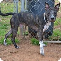 Adopt A Pet :: Magic - Athens, GA