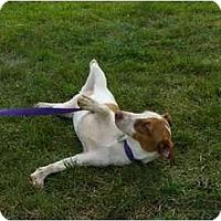 Adopt A Pet :: Carmine - Marysville, OH