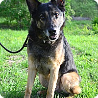 Adopt A Pet :: Sergeant - Indianapolis, IN
