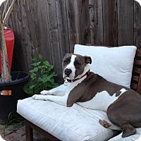 Adopt A Pet :: Heaven - San Diego, CA
