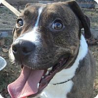 Adopt A Pet :: Garth - Blountstown, FL