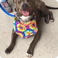 Adopt A Pet :: Delilah - St. Francisville, LA