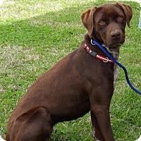 Adopt A Pet :: Athena(45 lb) GREAT Family Pet - SUSSEX, NJ