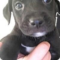 Adopt A Pet :: Garret - Foristell, MO
