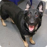 Adopt A Pet :: Tinsel - Richmond, VA